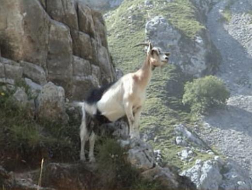 Ruta del Cares en los Picos de Europa entre Asturias y León