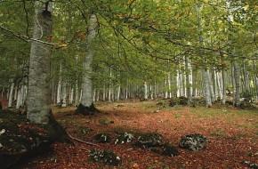 parque natural urbasa